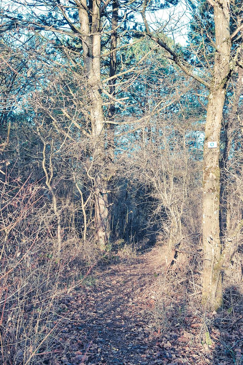 randonnée sur le sentier du batsberg en alsace