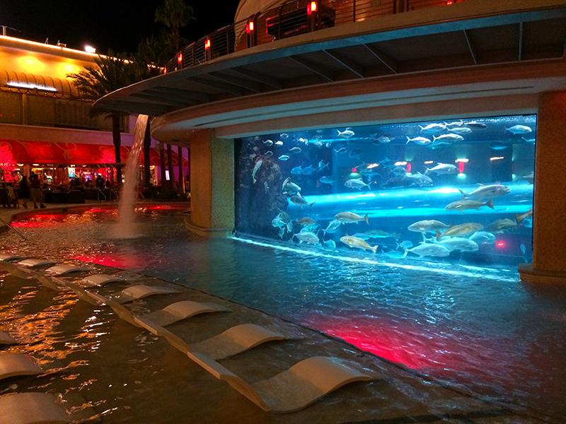 piscine-golden-nugget-shark