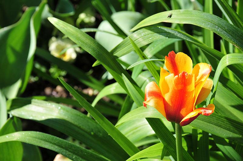 jardins de monet, giverny, printemps