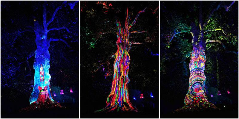 spectacle nocturne, arbre de la liberté, bayeux