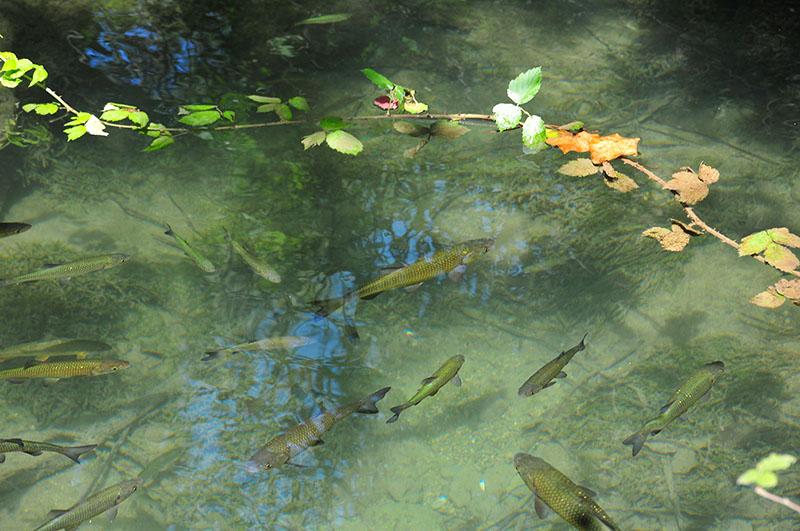 visite et informations sur le parc de krka en croatie, à sibenik, lors d'un road-trip