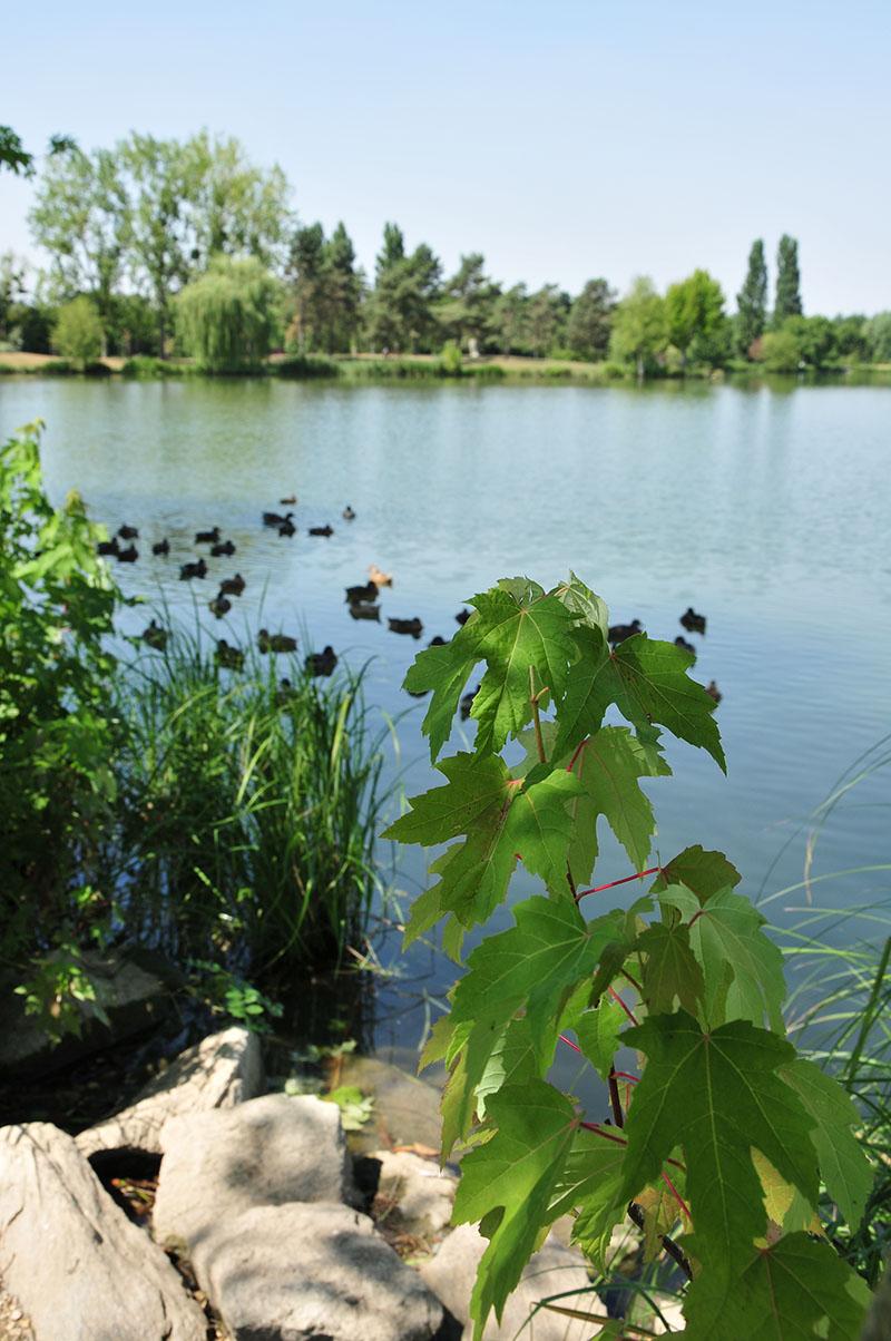 parc belle isle châteauroux