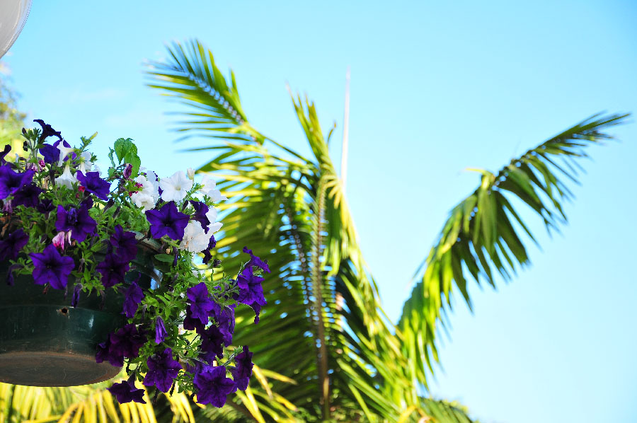 madère, l'île aux fleurs
