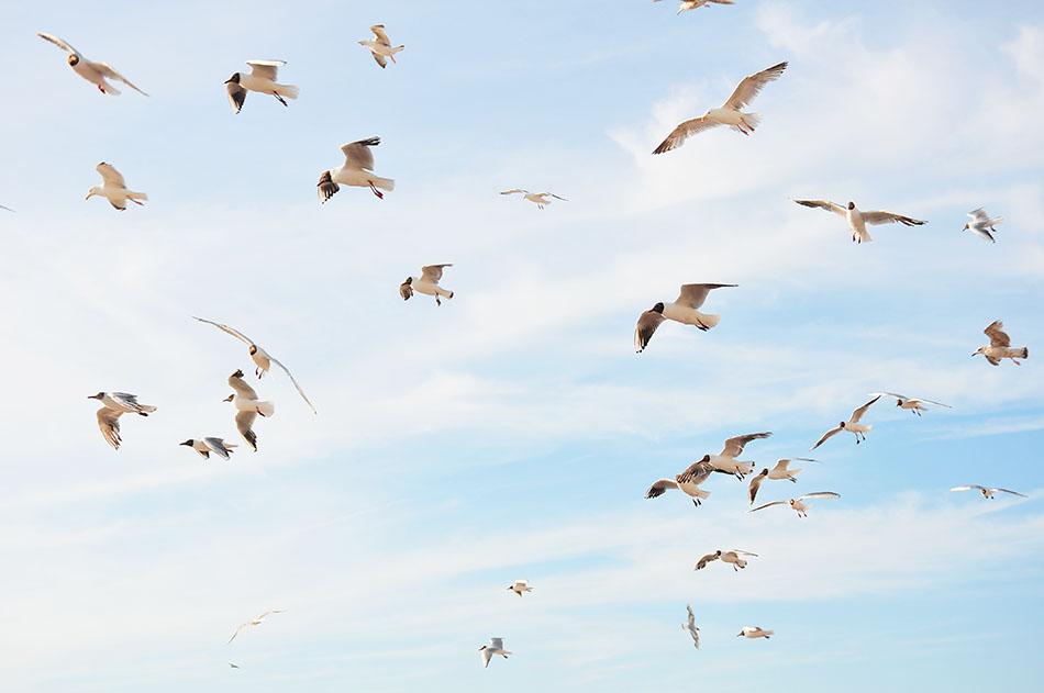 baie de somme, oiseaux