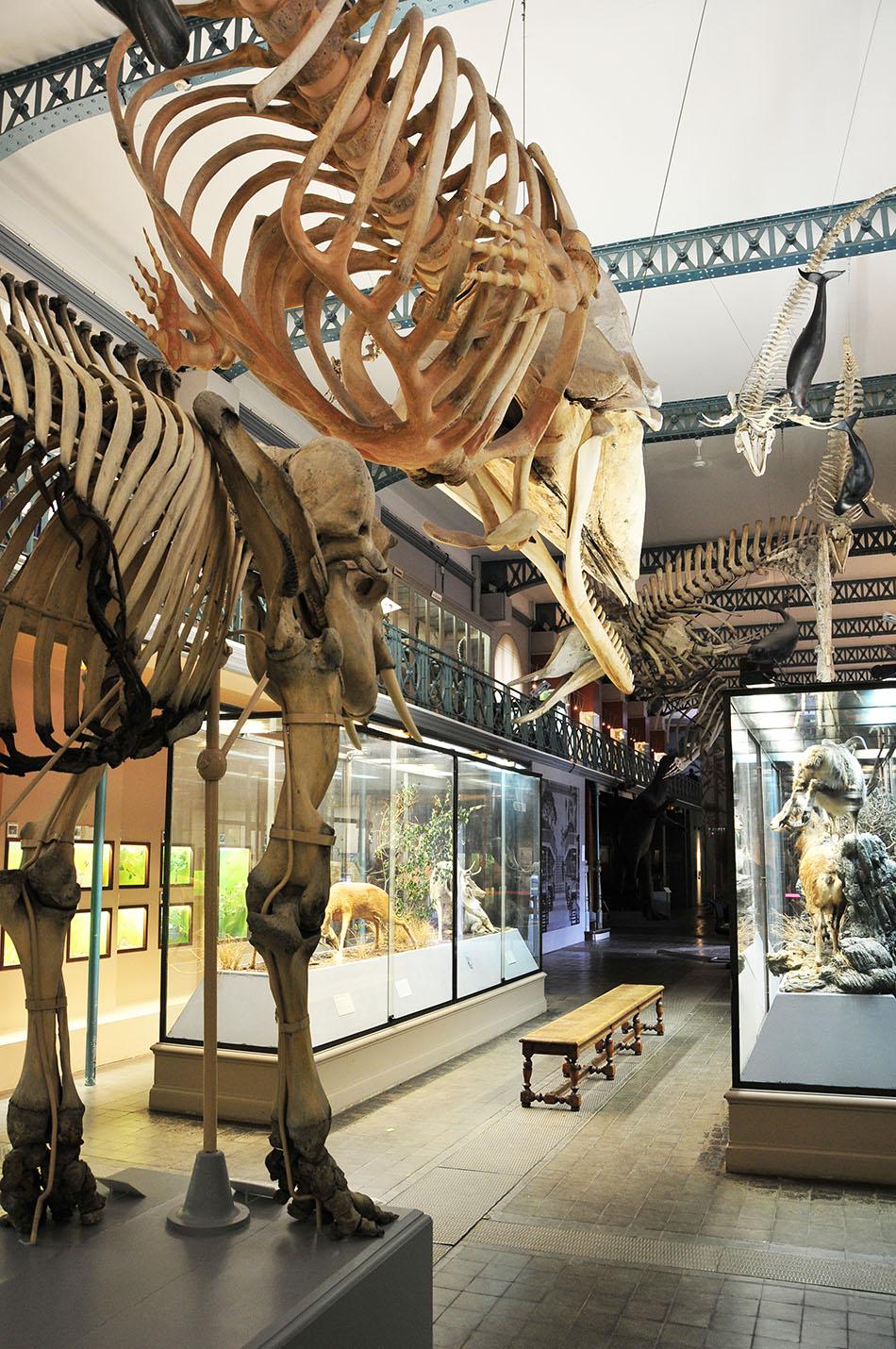 musee d'histoire et sciences naturelles, lille
