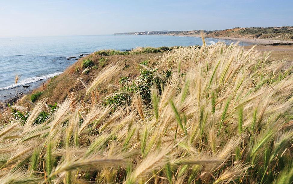 plage wimereux, nord-pas-de-calais