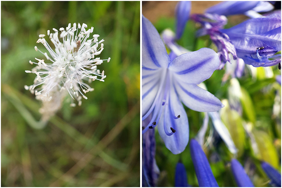 fleurs, slovénie, objectif super macro, pixter