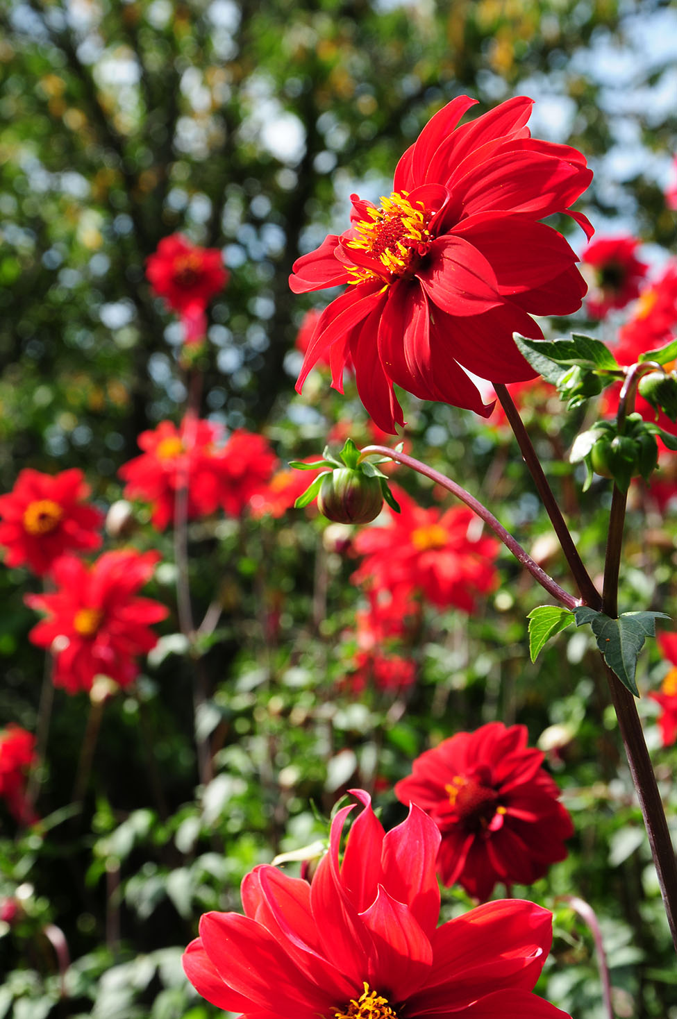 choses à faire dans l'Oise: découverte du jardin Van Beek