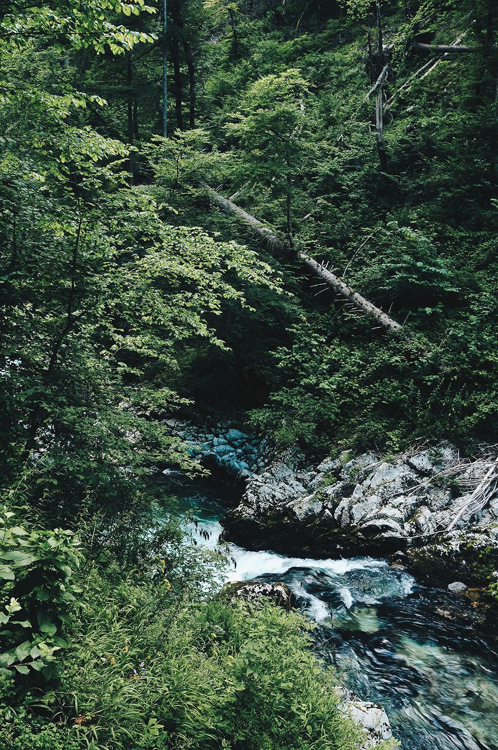 road-trip en slovénie: les gorges de vintgar