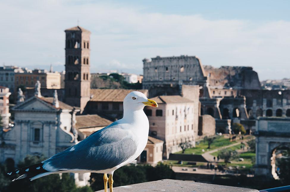 vue sur rome depuis vittoriano