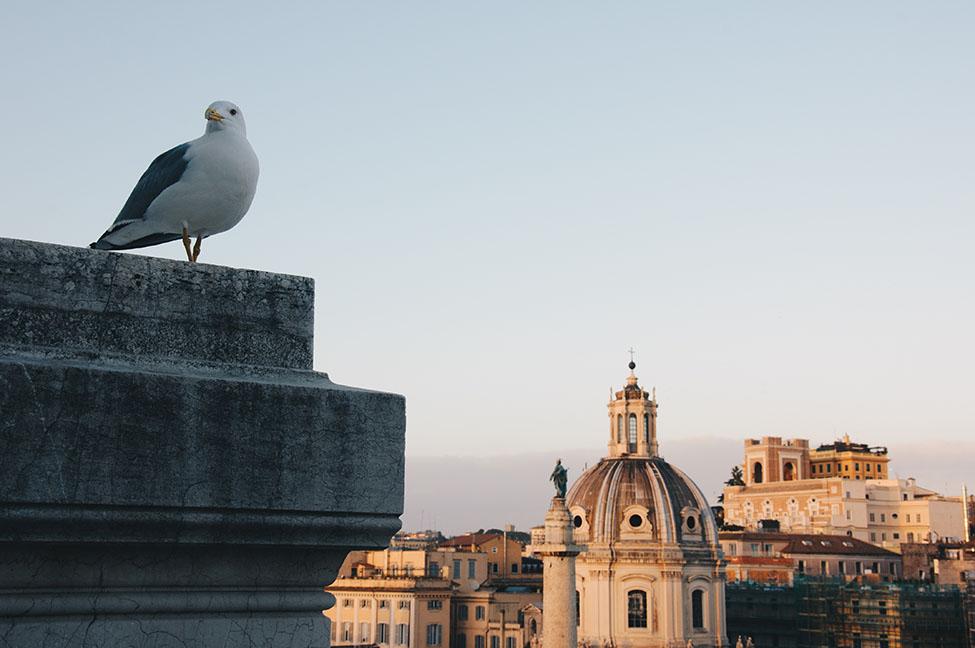 vue sur rome depuis le vittoriano