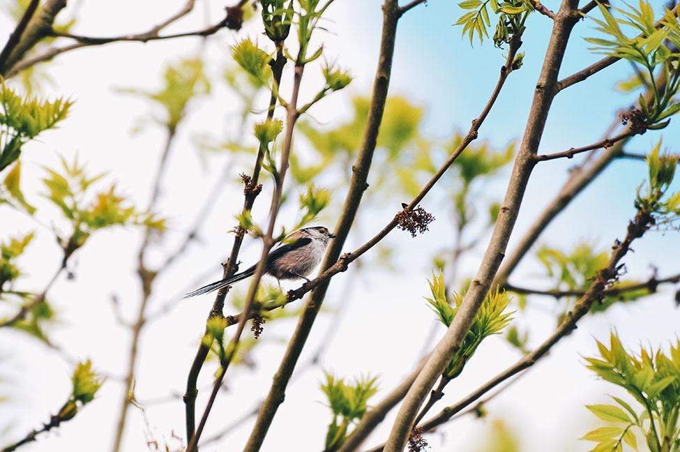 parc de la bouvaque, recherche d'oiseaux avec marc dallery, festival de l'oiseau et de la nature
