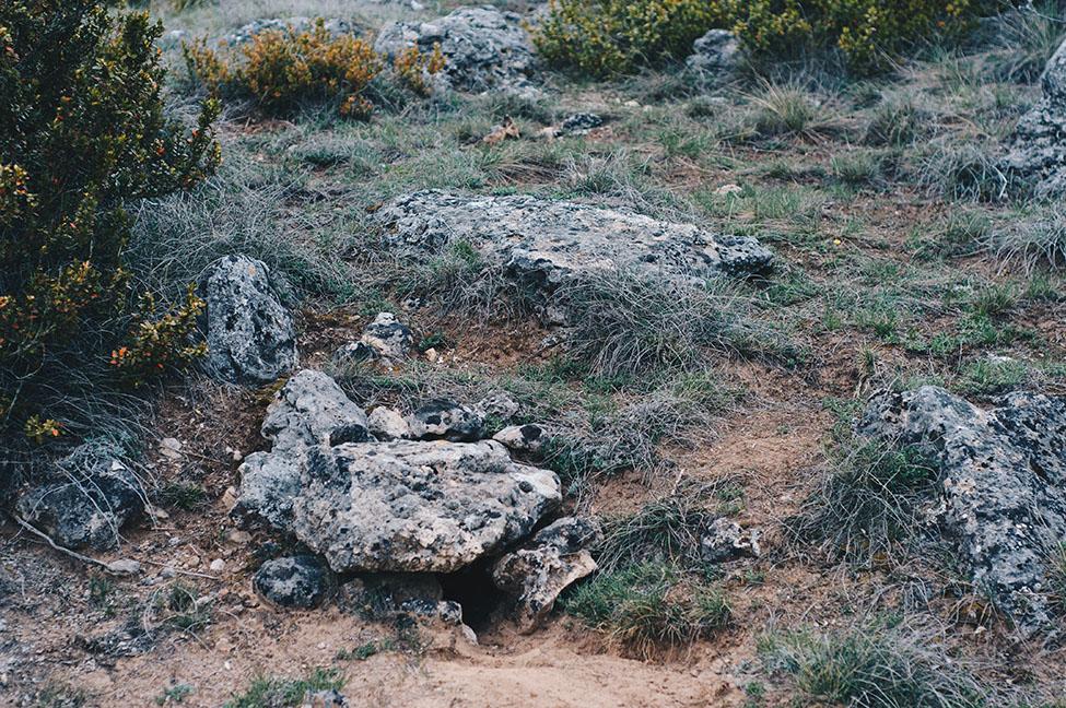 randonnée animée, les grands causses, végétation et roches, aveyron