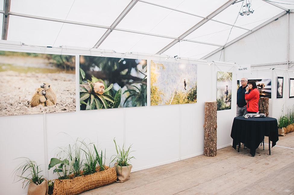 rencontres de la photo nature, le crotoy, festival de l'oiseau et de la nature