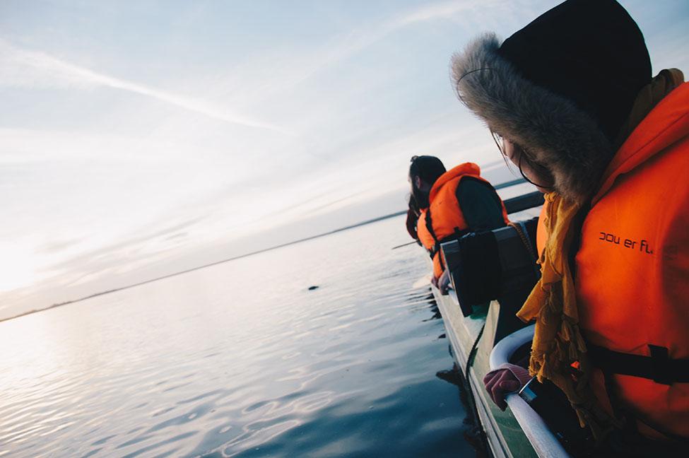 sortie pirogue à la rencontre des phoques, baie de somme