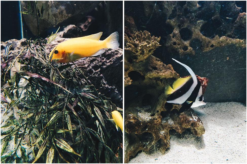aquarium, liege