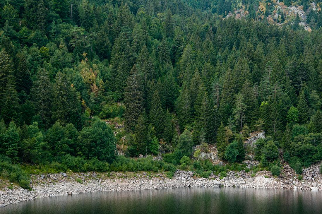 lac noir, randonner autour de Gérardmer , Vosges