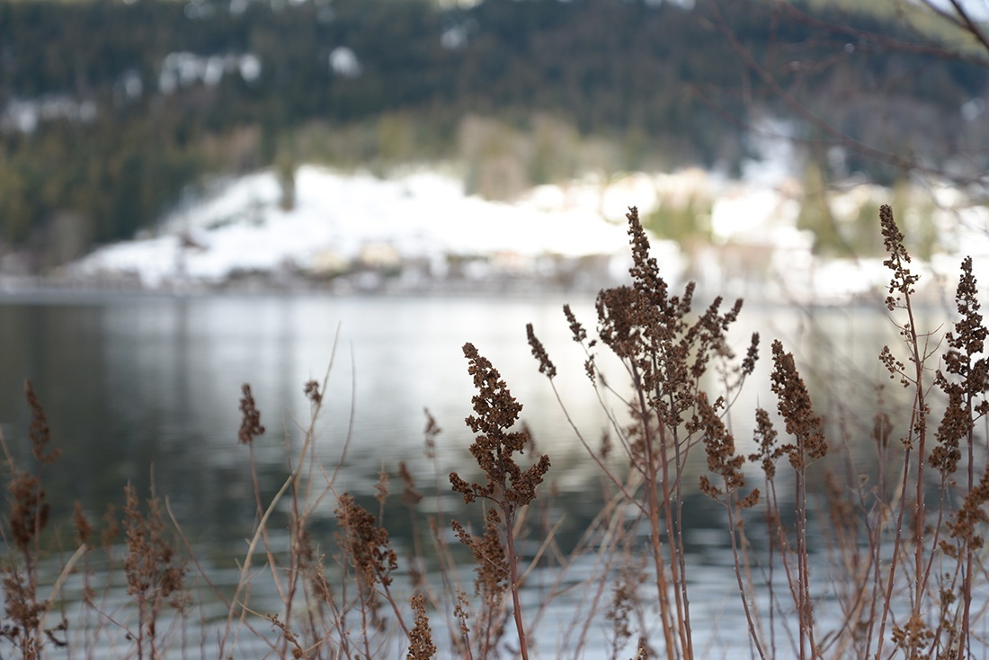 balade autour du lac de Gerardmer, hiver, neige, Vosges
