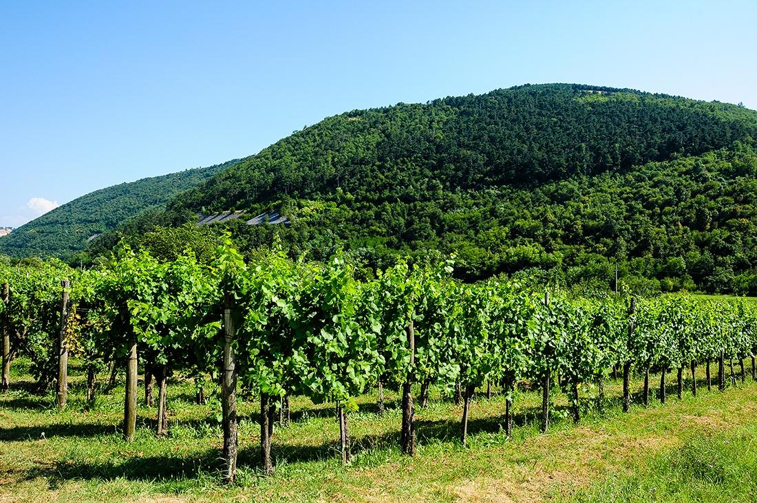 vallee vipava, choses à faire en slovenie