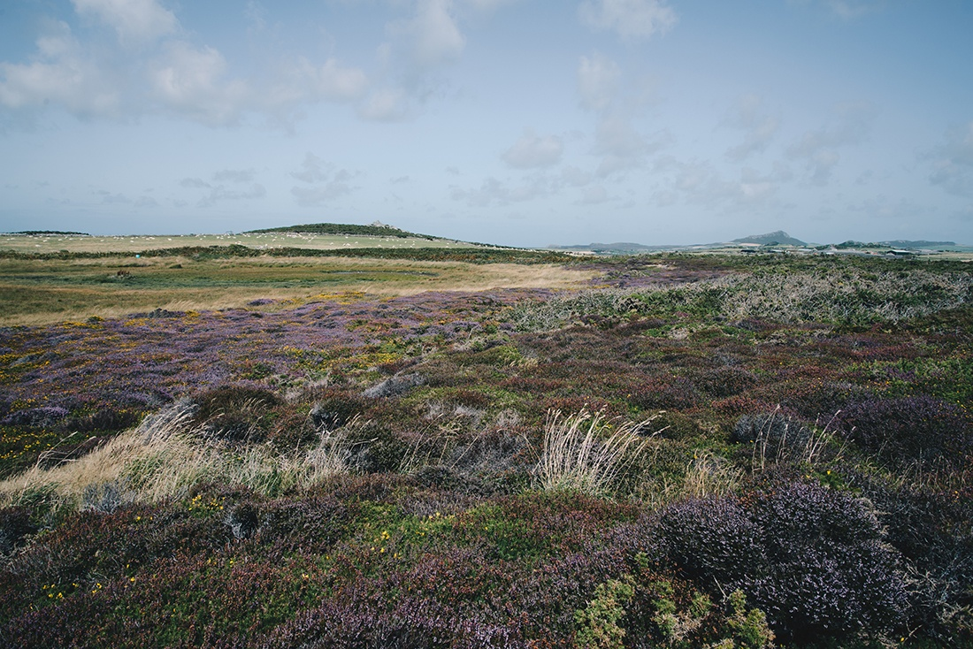 Pembrokeshire, randonnée autour de Saint David's, Pays de Galles