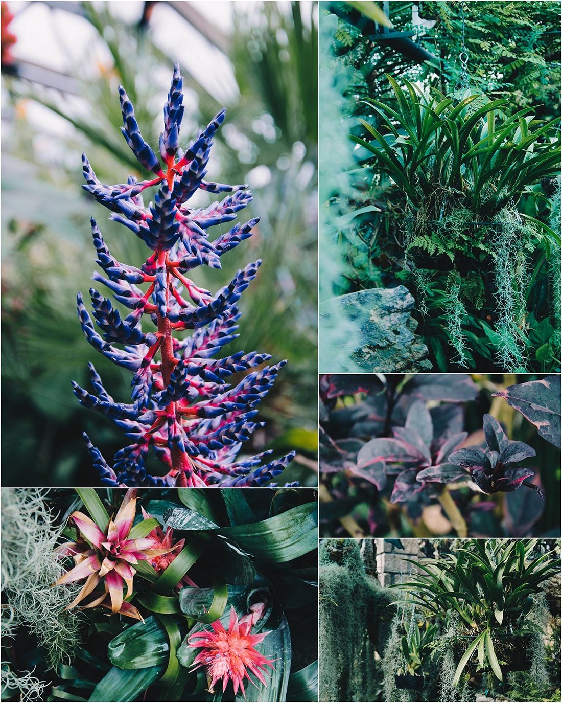 jardin botanique d'inverness, ecosse