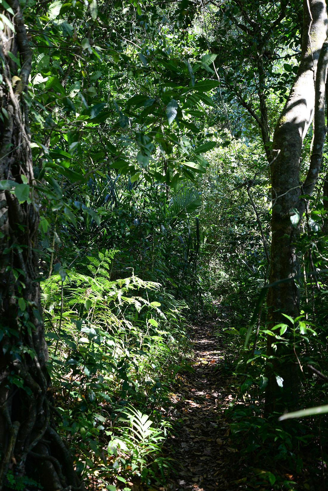 trek dans la jungle autour de munduk , bali
