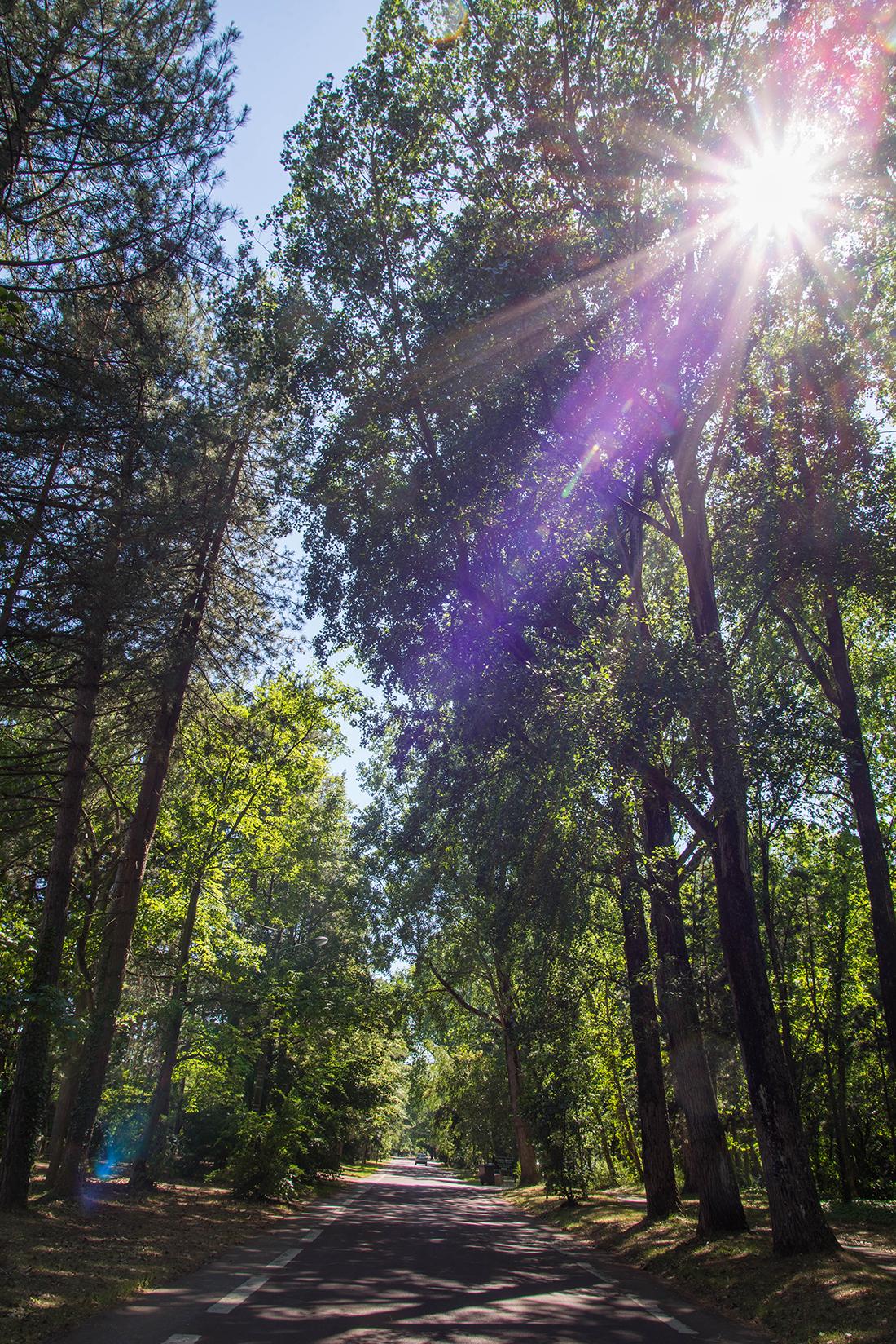 forêt,le touquet