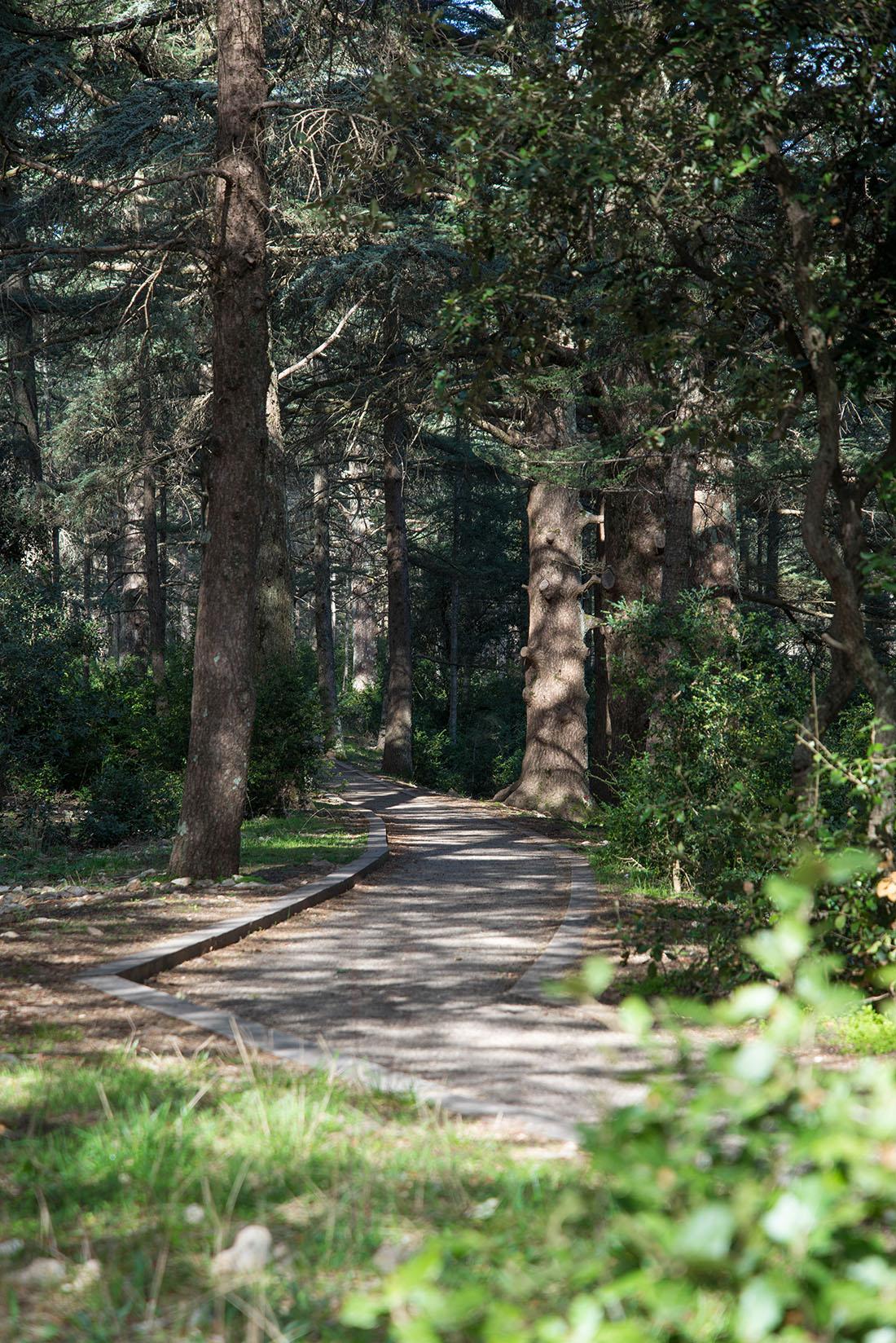 forêt des cèdes de bonnieux, luberon